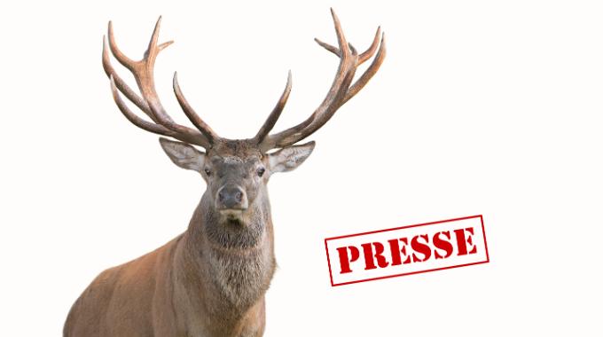 Rothirsch Presse NEU
