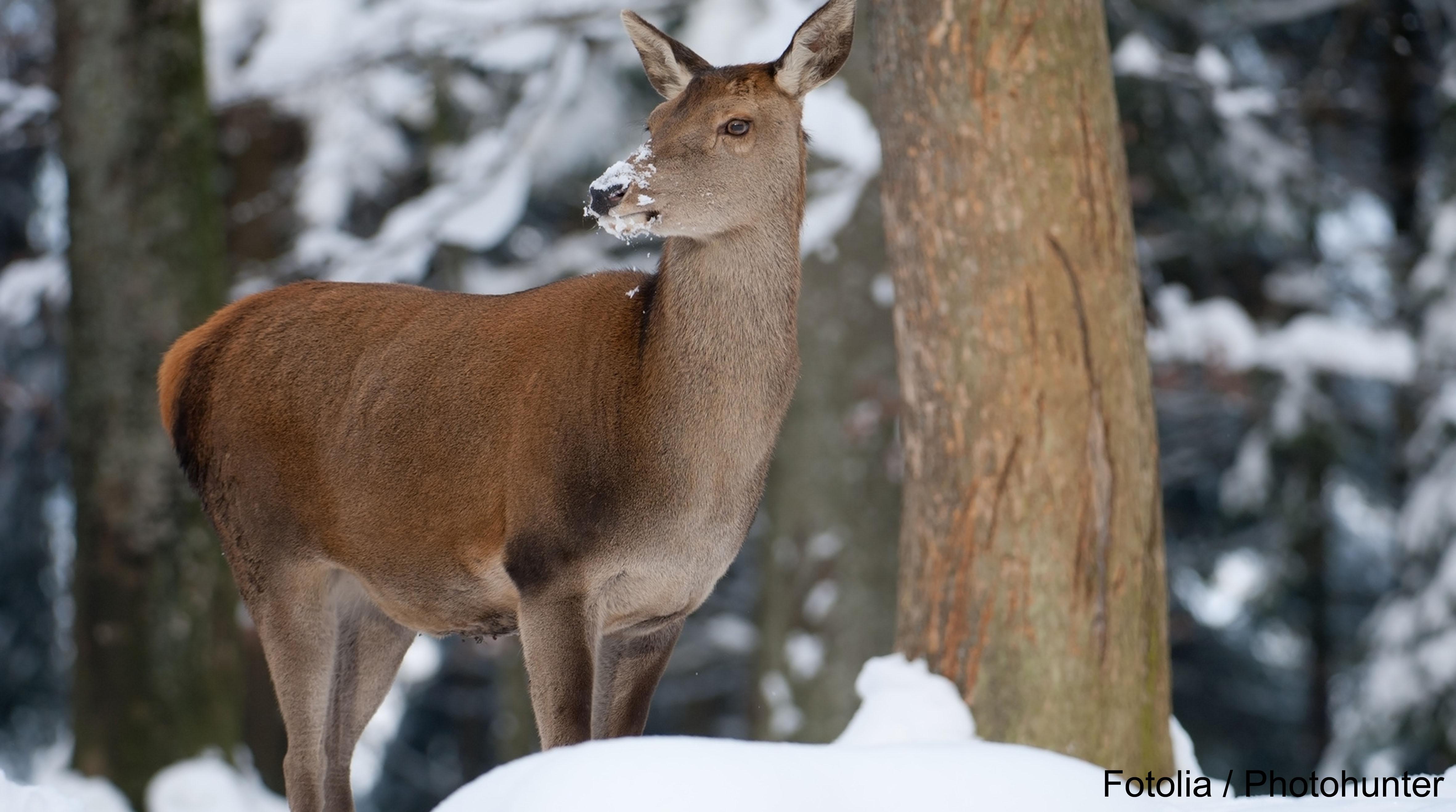 Wildschutzgebiet Statt Wintersport