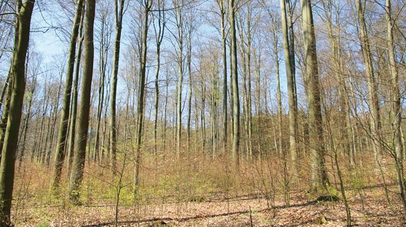 Verantwortung Für Waldbesitzer, Jäger Und Touristiker