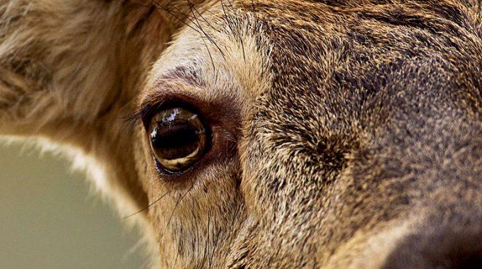 Tagungsband Zur Jagd In Großen Schutzgebieten Veröffentlicht