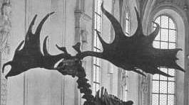 Beitragsbild Riesenhirsch Jagdmuseum