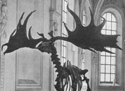 Evolution Der Hirschartigen