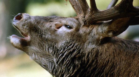Wildtierbeobachtung Am Schluchsee