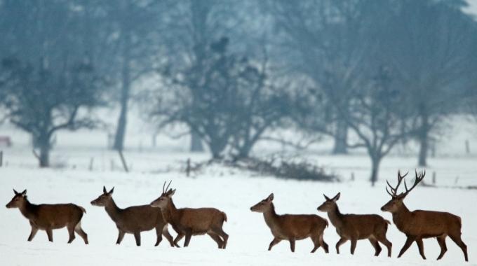 Deutsche Wildtier Stiftung Verurteilt Schonzeitaufhebung In RLP