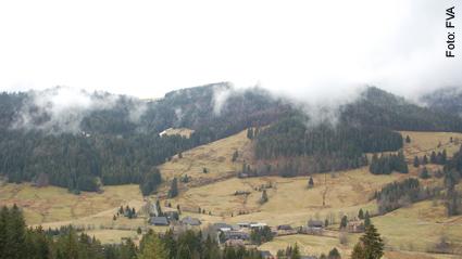 Schalenwild Nationalpark Nordschwarzwald