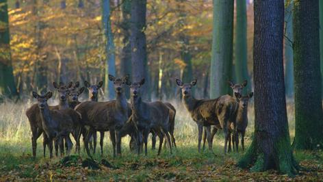 Die Deutsche Wildtier Stiftung Veröffentlicht Forderungen Zum Umgang Mit Huftieren In Großschutzgebieten