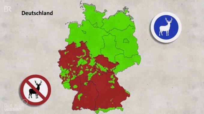Gut Zu Wissen: Wintergatter Und Rotwildbezirke Im BR