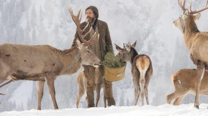 Streit Um Winterfütterung In Österreich Entbrannt